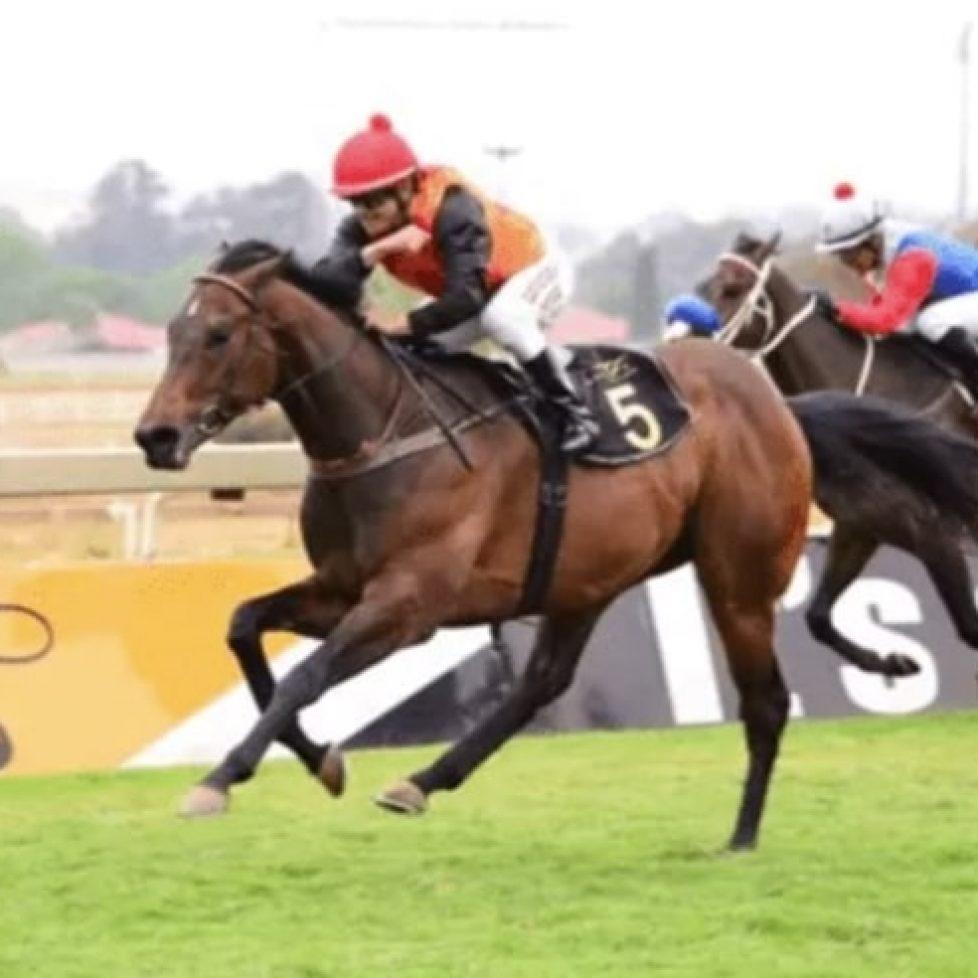конни надбягвания на 31 август - Selby's Pride